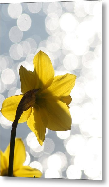 Water Reflected Daffodil Metal Print by Karla DeCamp