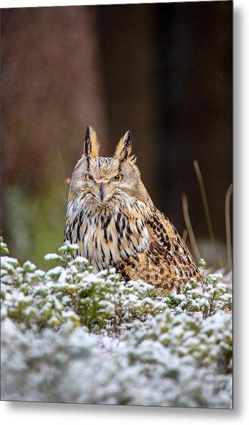 Western Siberian Owl Metal Print