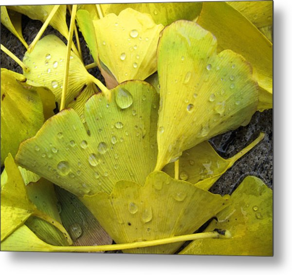 Wet Yellow Leaves 2 Wc  Metal Print by Lyle Crump