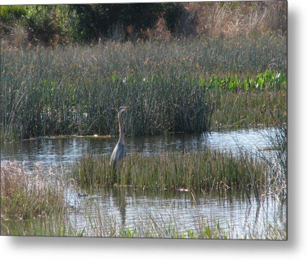 Wetlands Metal Print