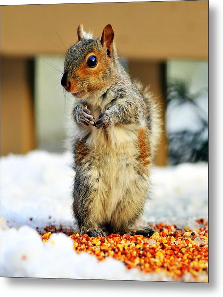 What About Some Acorns Metal Print