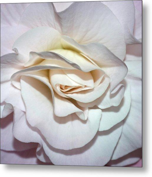 White Begonia Metal Print