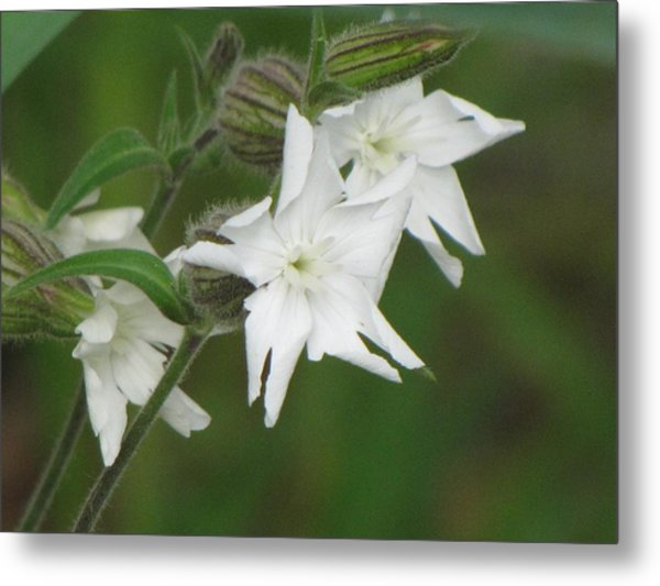 White Flowers Metal Print by Sylvia Wanty