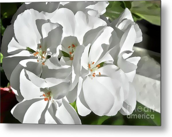 White Geraniums Metal Print