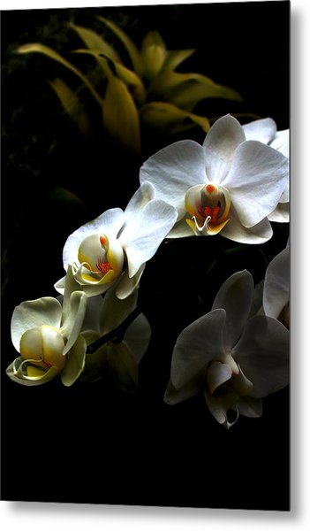 White Orchid With Dark Background Metal Print