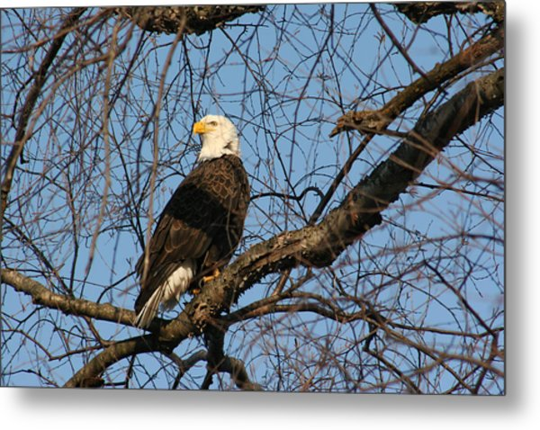 Whos Back There Metal Print by Dave Clark