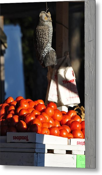 Who's Tomatoes Metal Print by Jan Amiss Photography