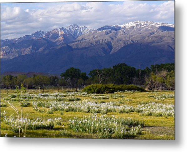 Wild Iris And The White Mountains Metal Print