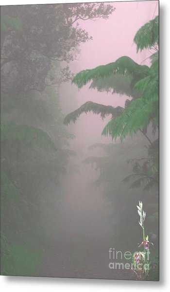 Wild Orchid In Volcano Mist Metal Print by Uldra Patty Johnson