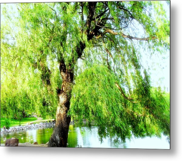 Willow Over Pond Metal Print