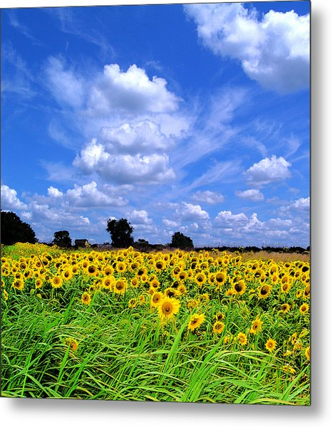 Windswept Field And Sky Metal Print