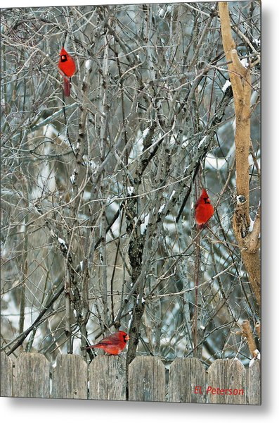 Winter Cardinals Metal Print