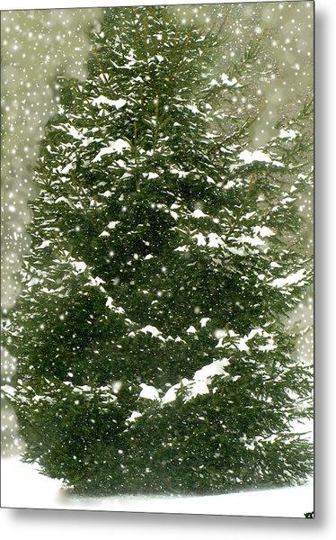 Winter Shines Over Pine Metal Print