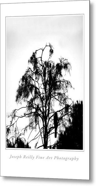 Winter Sky Wood Storks Metal Print by Joseph Reilly