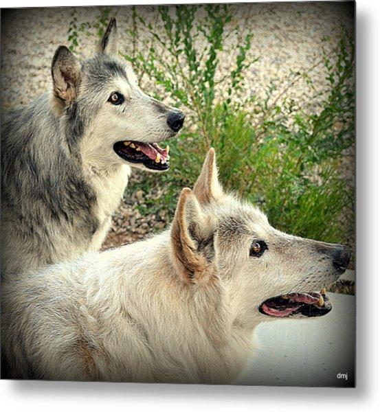 wolves XV Metal Print
