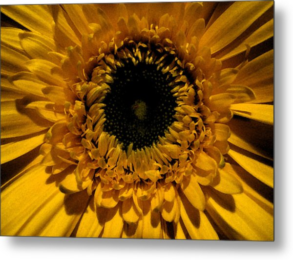 Yellow flower with black center photograph by patricia januszkiewicz yellow flower with black center metal print by patricia januszkiewicz mightylinksfo