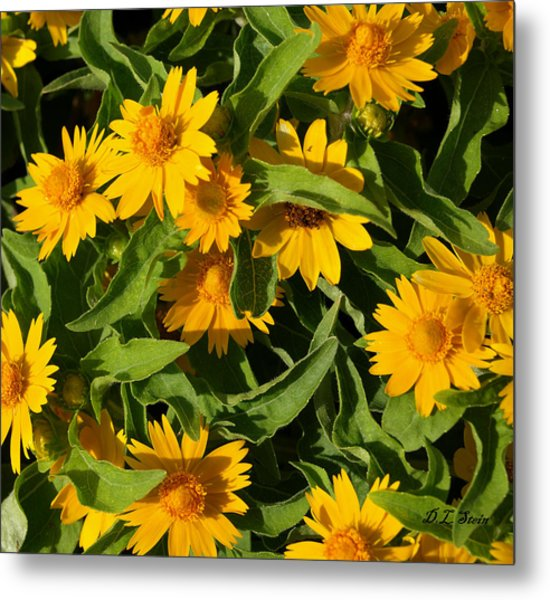 Yellow Flowers Metal Print by Dennis Stein