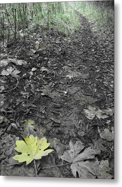 Yellow Leaf Road Metal Print by Jeff White