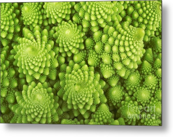 Roman Broccoli Isolated On White Metal Print