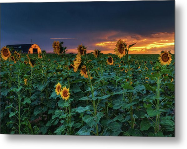 Metal Print featuring the photograph Whispers Of Summer by John De Bord