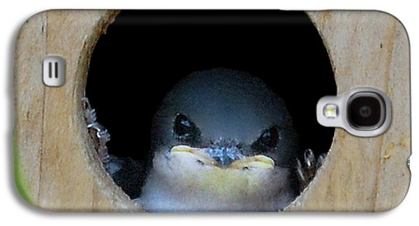 Barn Swallow Chick Galaxy S4 Case by DigiArt Diaries by Vicky B Fuller