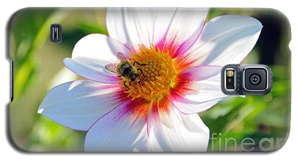 Bee On Dahlia Galaxy S5 Case