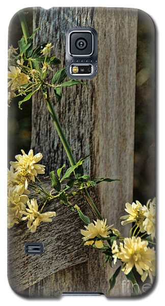 Lady Banks Rose Galaxy S5 Case by Peggy Hughes