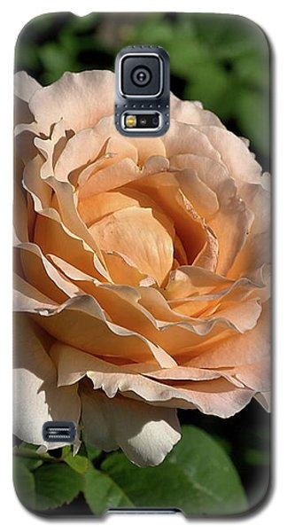 Galaxy S5 Case featuring the photograph Orange Rose by Joy Watson