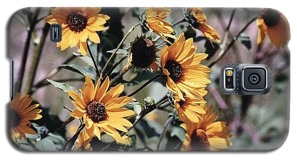 Galaxy S5 Case featuring the photograph Arizona Sunflowers by Juls Adams