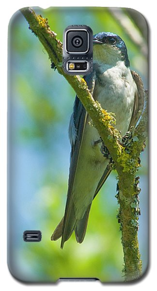 Galaxy S5 Case featuring the photograph Bird In Tree by Rod Wiens