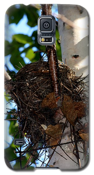 Bird Nest In Birch Tree Galaxy S5 Case by Marjorie Imbeau