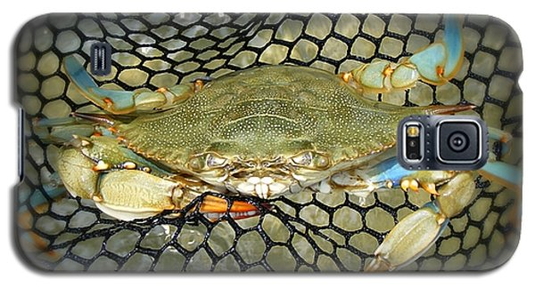 Galaxy S5 Case featuring the photograph Blue Crab by Kelly Nowak
