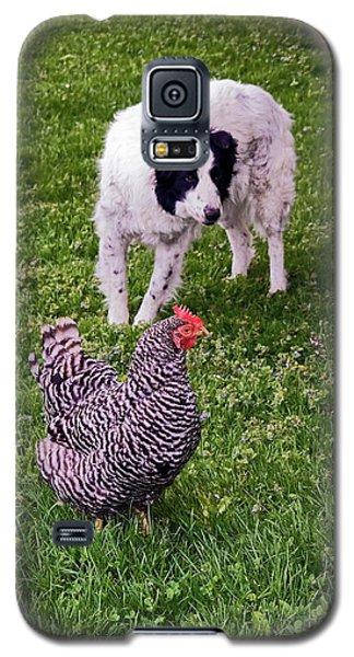 Border Collie Herding Chicken Galaxy S5 Case by Sally Weigand