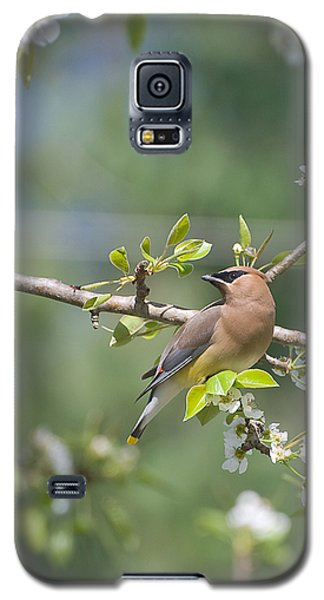 Galaxy S5 Case featuring the photograph Cedar Waxwing by Margaret Palmer