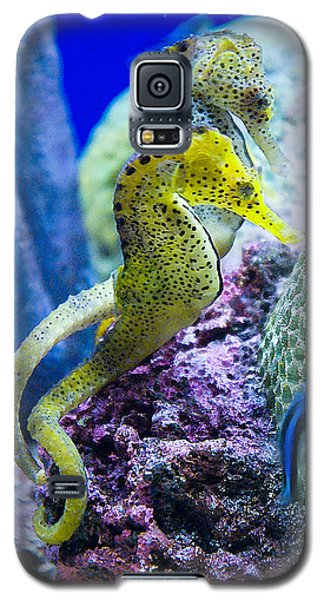 Colorful Seahorses Galaxy S5 Case