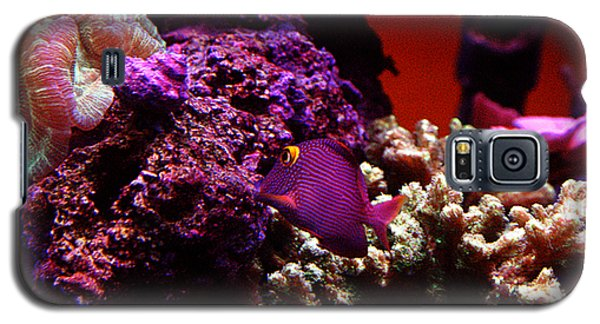 Galaxy S5 Case featuring the photograph Colors Of Underwater Life by Clayton Bruster