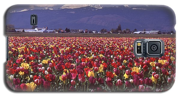 Field Of Tulips And Mount Baker Galaxy S5 Case