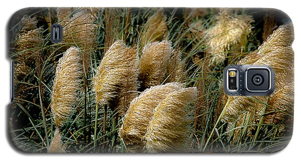 Golden Pampas In The Wind Galaxy S5 Case