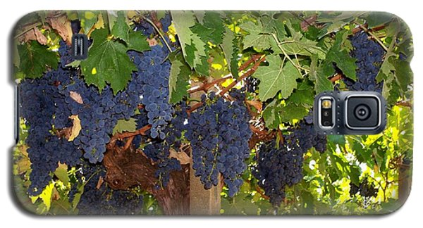 Galaxy S5 Case featuring the photograph Grapes Are Ready by Judy Kirouac