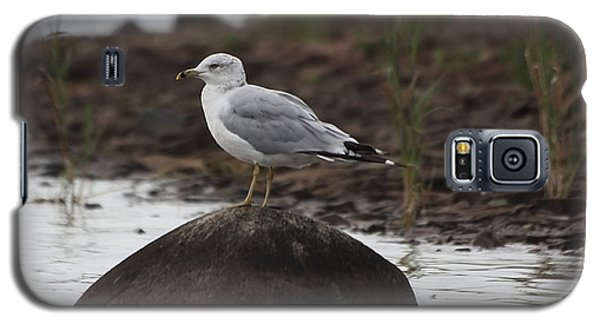 Gull On A Rock Galaxy S5 Case by Marjorie Imbeau