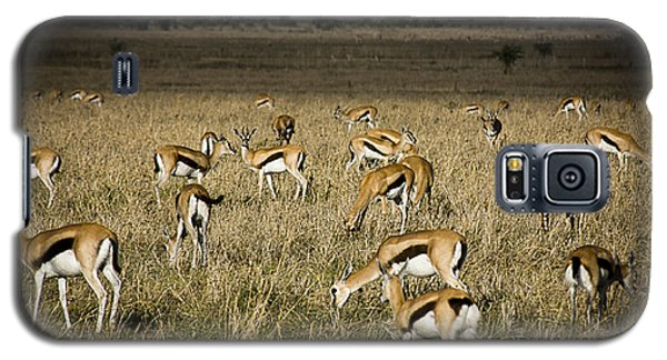 Herd Of Antelope Galaxy S5 Case by Darcy Michaelchuk