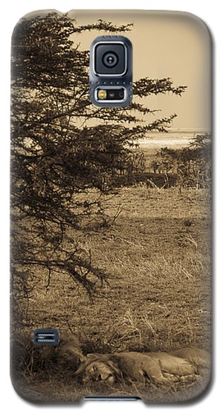 Male Lions Snoozing In Shade Galaxy S5 Case by Darcy Michaelchuk