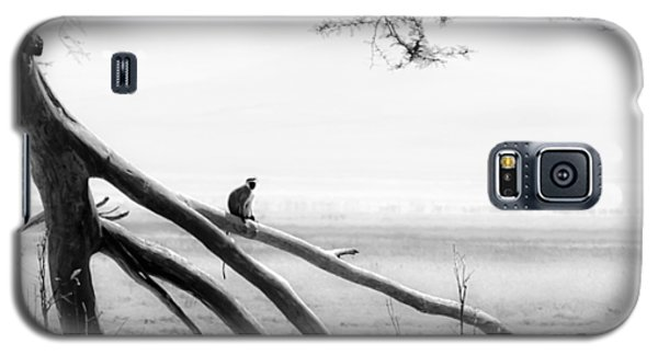Monkey Alone On A Branch Galaxy S5 Case by Darcy Michaelchuk