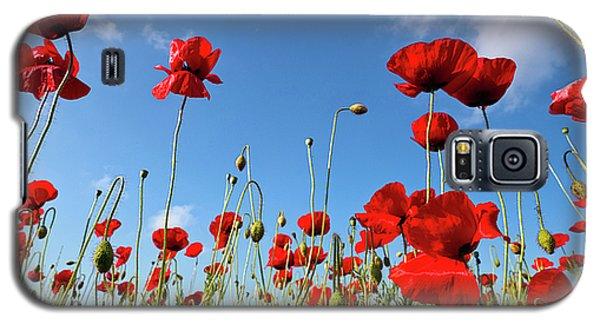 Poppies Season Galaxy S5 Case