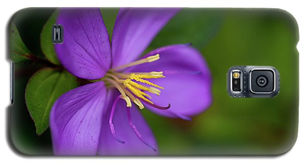 Purple Flower Macro Galaxy S5 Case