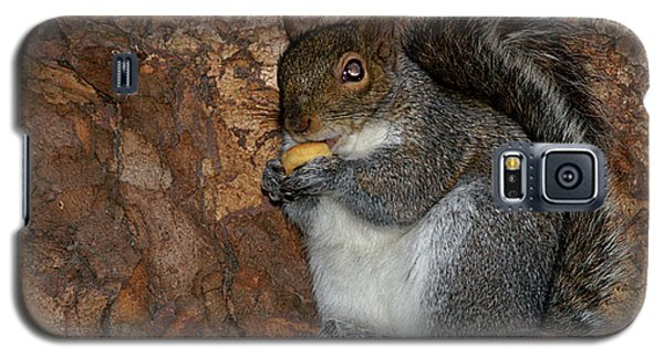Galaxy S5 Case featuring the photograph Squirrell by Pedro Cardona