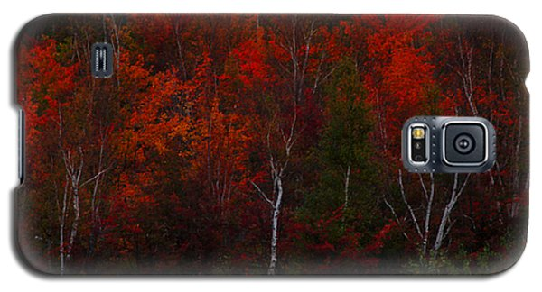 The Reds Have It Galaxy S5 Case by Marjorie Imbeau