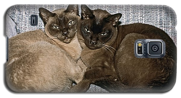 Galaxy S5 Case featuring the photograph Tonkinese Pals by Sally Weigand