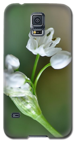 White Blossom 3 Galaxy S5 Case
