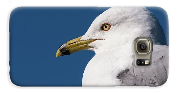 Ring-billed Gull Portrait Galaxy S6 Case